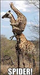 fear giraffe